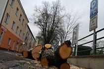Prořezávka stromů na nábřeží Petra Bezruče