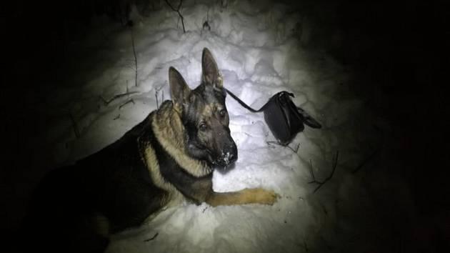 Policejní pes Garrit.