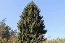 POKUD máte na zahradě podobný strom a nepotřebujete ho, můžete ho darovat městu.