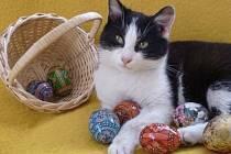 Velikonoce v kočičím útulku