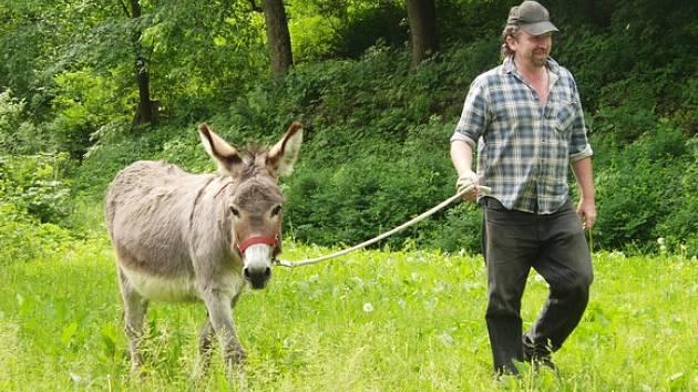 Kastelán Hartenbergu Bedřich Loos vede na provaze osla Viktora.