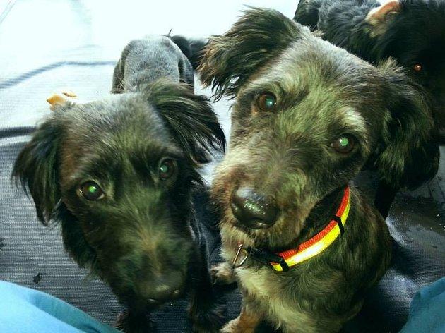 Jedni z jedenácti psů, kteří hledají nový domov
