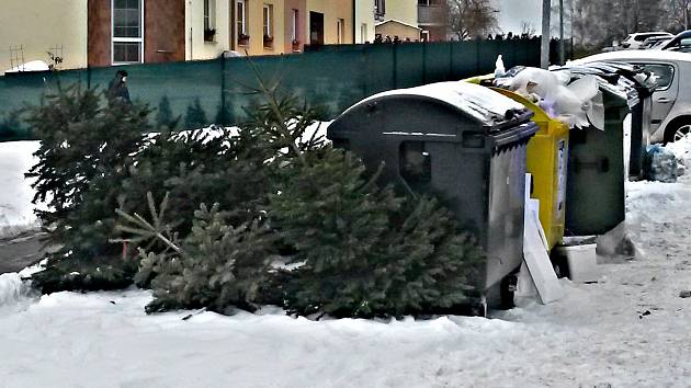 Vánoční stromky v Sokolově