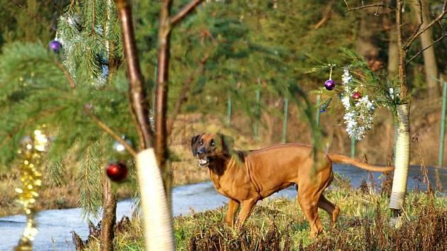 ANI OPUŠTĚNÁ zvířata nemusejí o Vánocích strádat. V mnoha útulcích na ně pamatují.
