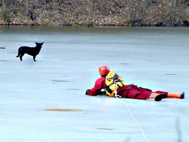 ZÁCHRANA psa na vodní ploše v Mírové u Chodova.