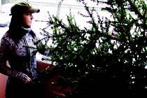 Lidé se v těchto dnech zbavují vánočních stromků.
