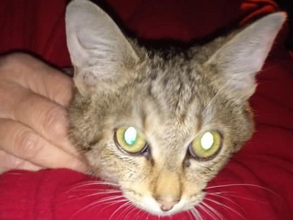 Půlroční kotě někdo postřelil. Ženy uspořádaly sbírku na léčbu.