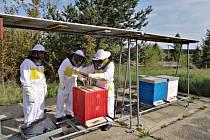 Odsouzení v kynšperské věznici letos poprvé stáčeli med.