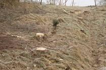 Vykácený les.