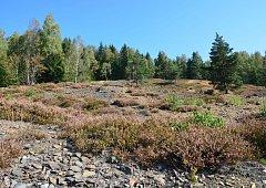Vřesoviště na Tisovci  jsou novou přírodní památkou.
