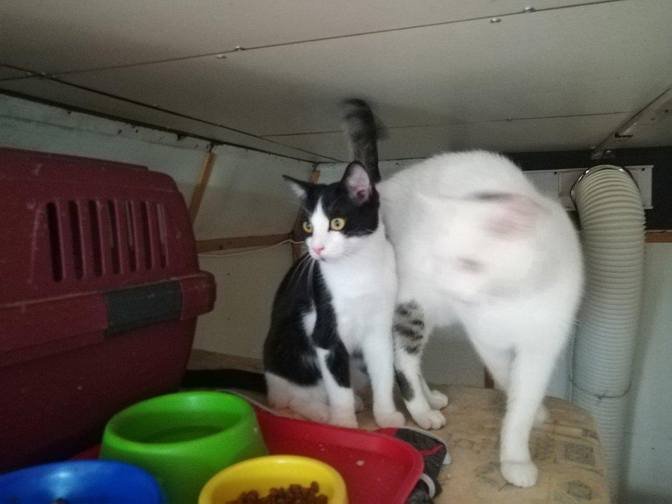 Ve čtvrtek dostaly dvě dobrovolnice klíče a mohou stěhovat kočky z maringotky do nového. Trvat to bude zhruba do srpna.