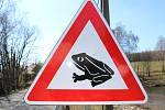 Pod koly aut hynou stovky žab.