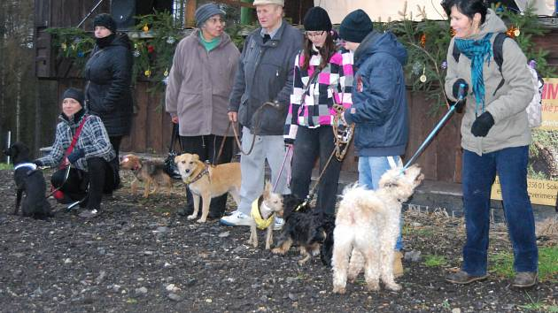Psi ze sokolovského útulku, kteří našli svůj domov