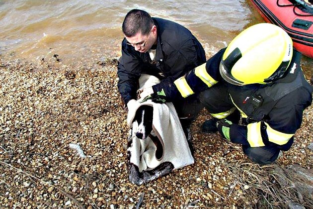 Hasiči zachraňovali psa z ledového jezera.