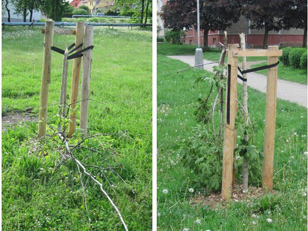 Zničené stromy v Sokolově