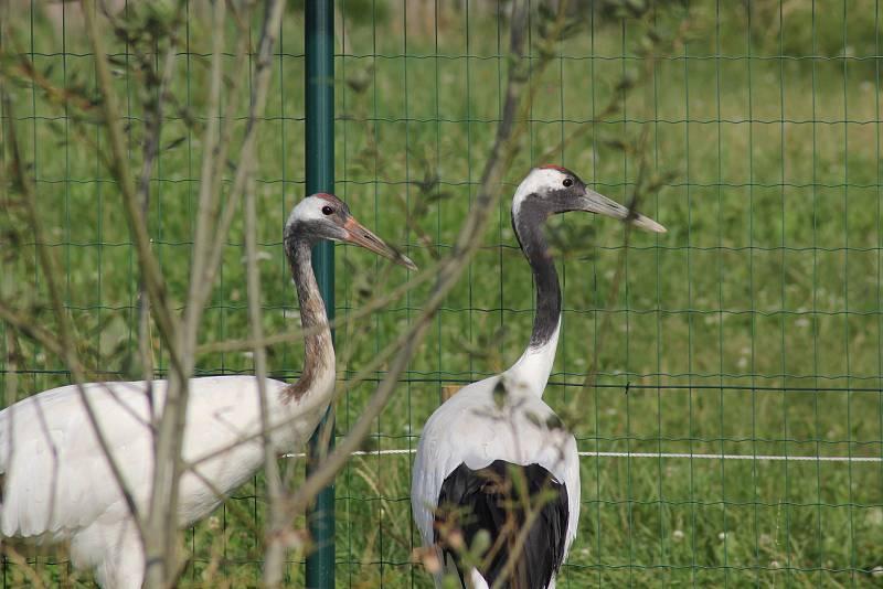 Ptačí obyvatelé táborské zoo. Ilustrační foto.