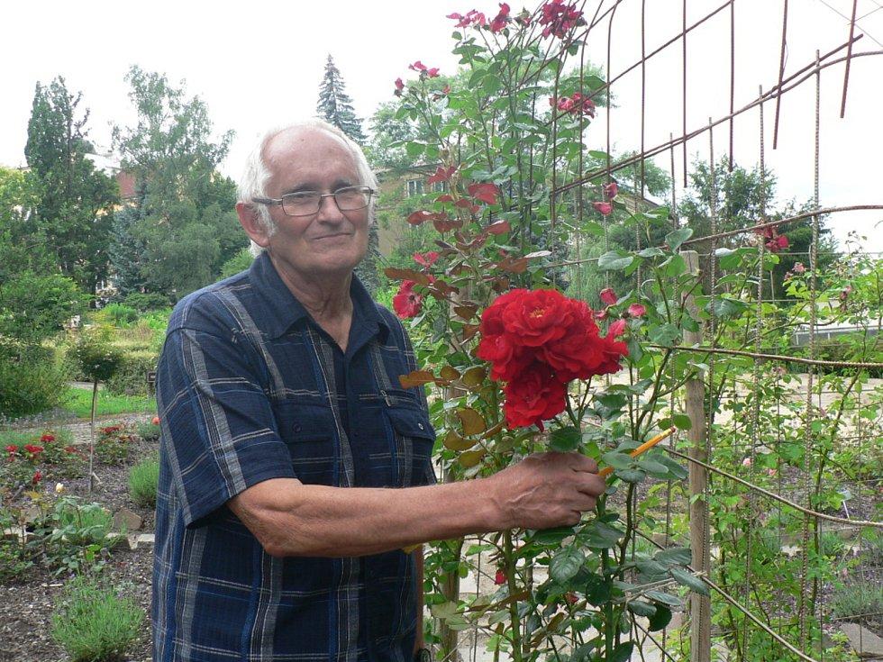 V Táboře se koná třídenní výstava růží. Na snímku botanik RNDr. Jiří Žlebčík, odborník na šlechtění růží.