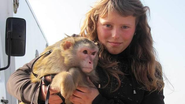 Cirkus Berousek má v programu celou řadu vystoupení se zvířaty. Představí se i opička Marcelka (na snímku s Karinou Berouskovou). Pro dospělého stojí lístek 170 Kč, pro dítě stovku.