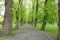 V Holečkových sadech vysadí nové stromy. Ilustrační foto