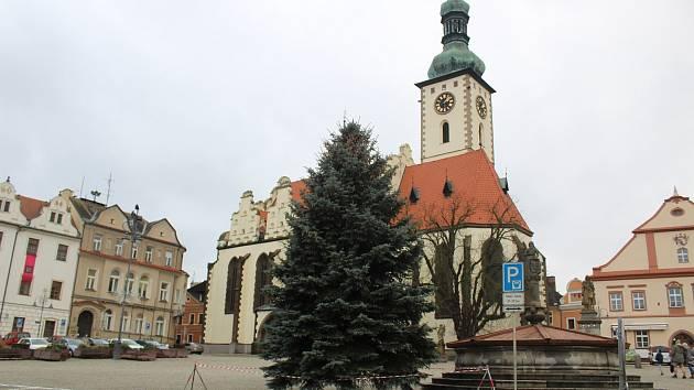 Táborský vánoční strom převezli v pondělí dopoledne na Žižkovo náměstí pracovníci táborských technických služeb z blízkého Sezimova Ústí.