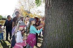 Den stromů. Ilustrační foto.