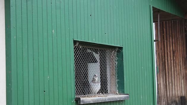 V Dlouhé Lhotě na Táborsku lidé respektují nařízení veterinářů, slepice i další ptactvo mají zavřené.