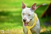 Pancho je kříženec psa typu bull a hledá domov.