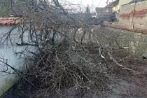 Následky větru 12. března 2021 v Táboře v parku Pod Kotnovem v Táboře.