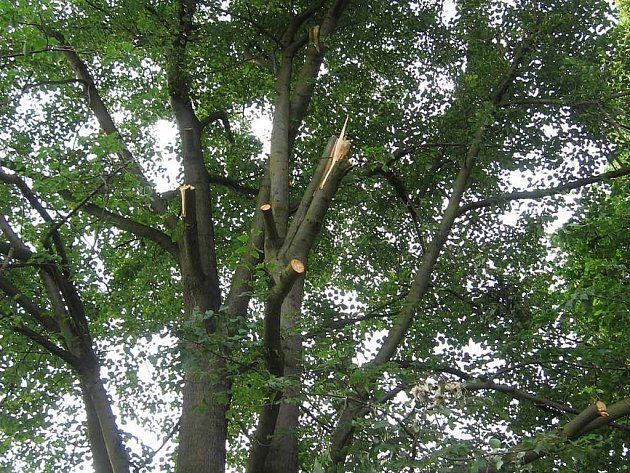 Jeden z poničených stromů.