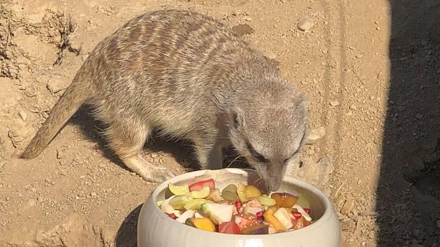 Sobotní a nedělní krmení vybraných druhů zvířat v Zoo Tábor láká návštěvníky.