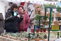 V Táboře se v sobotu koná trh.