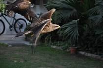 Jedním z největších zážitků bylo krmení orlů.