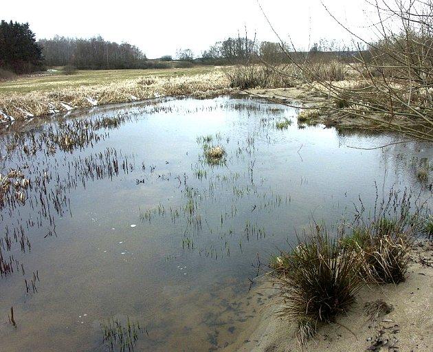 Přírodní rezervací byly vyhlášené v roce 1996. Díky výskytu několika celoevropsky významných biotopů a především piskoře pruhovaného je celá skoro čtyřiceti hektarová oblast zahrnutá do evropsky významné lokality Lužnice a Nežárka.