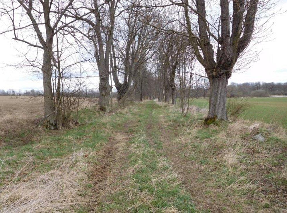 Zajistit dodavatelsky posouzení statiky, prořezání a odstranění stromů popadaných po vichřici na obnovené staré Křivošínské cestě v úseku od Tisové ke Křivošínu