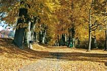 Alej vysazená roku 1836 vede od Klokotského kláštera směrem k Tismenickému údolí. Skládá se z 93 lip malolistých a 3 olší lepkavých.