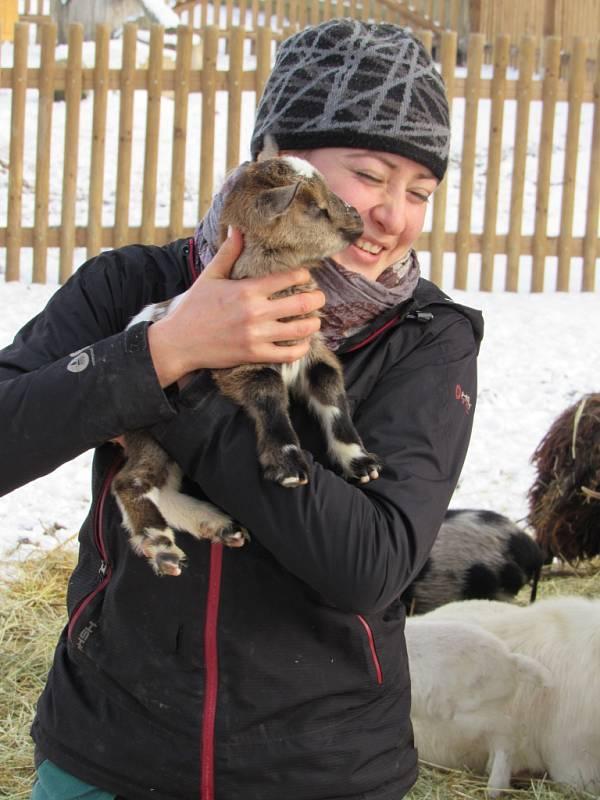 Ošetřovatelka Zuzana Panovská s kůzletem v Zoo Tábor.