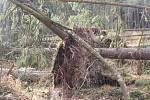 Sabine natropila na Táborsku asi největší neplechu v lese mezi Turovcem a Kozím hrádkem. Vyvracela stromy s kořeny a lámala je jako sirky, Lesy ČR silnici kvůli bezpečnosti uzavřely.