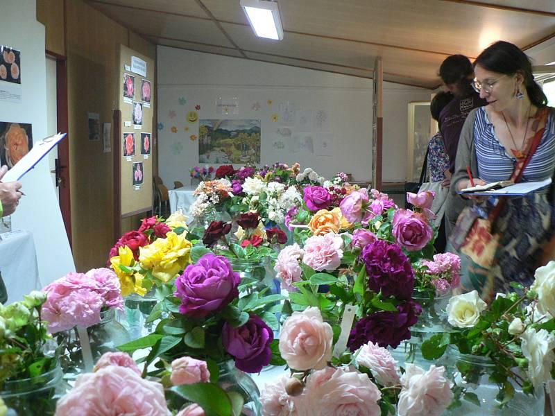 V Táboře se koná třídenní výstava růží.
