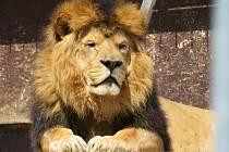 Z táborské zoo. Ilustrační foto.
