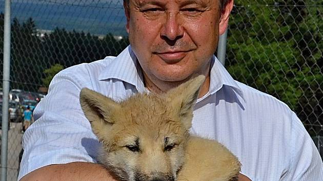 Ředitel Zoo Tábor Evžen Korec držel mládě vyhubením ohroženého vlka arktického.