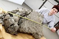 Sršní hnízdo měří 95 centimetrů, po obvodu má  123 centimetry a váží téměř kilo. V pelhřimovské agentuře Dobrý den mají zaznamenané rekordní hnízdo s obvodem 168 centimetrů. Majitelé rodinného domu  – na snímku Jindřiška Tarabová, čekali téměř rok než bud