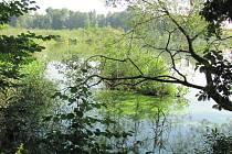 Nový rybník byl unikátní neukotvenými kusy břehů, na nichž rostly i stromy. Téměř ale vymizely.