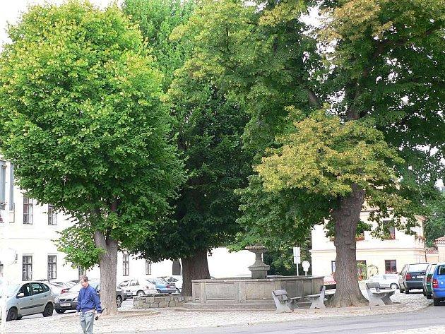 Táborským stromem roku 2007 se staly tři lípy na náměstí Mikuláše z Husi.