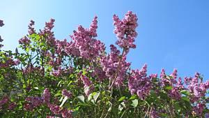 Táborská botanická zahrada kvete, voní a žije
