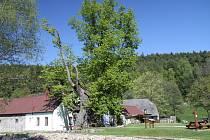 Nejmohutnější památná lípa v jižních Čechách přestála orkán Kyrill i povodně v letech 2002 a 2009.