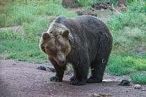 Zoo nelegálně postavené stavby včetně medvědária zatím odstraňovat nemusí (ilustrační foto).