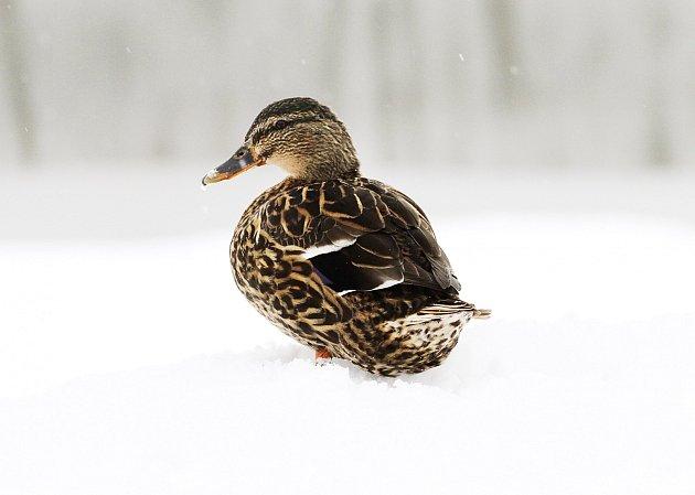 Sníh zaskočil nejen řidiče, ale i přírodu.
