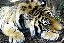 Občané Tábora mají podpisem říct, zda chtějí  lidové hlasování o zachování Zoologické zahrady Větrovy