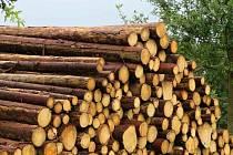 Zloději dřeva řádili na Soběslavsku. Zůstala po nich škoda 42 tisíc korun.
