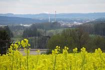 Pole na Táborsku rozkvetla, žluté lány těší zemědělce.
